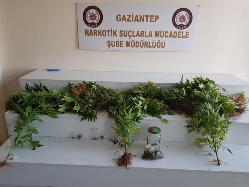 Gaziantep'te uyuşturucu operasyonu 1 gözaltı