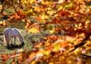 Dünya'dan Sonbahar Manzaraları